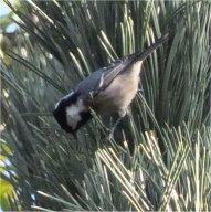 vogels bijvoeren zomer